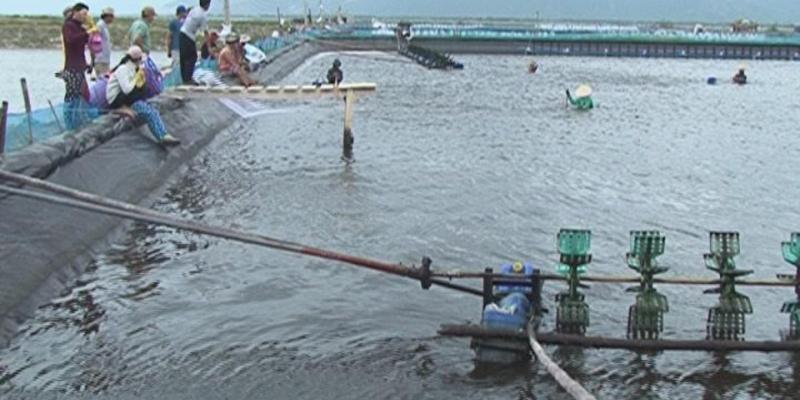 Bạt hdpe lót hồ nuôi tôm cá